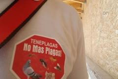 Contol de palomas  Galeon, Tenerife, Adeje TenePlagas