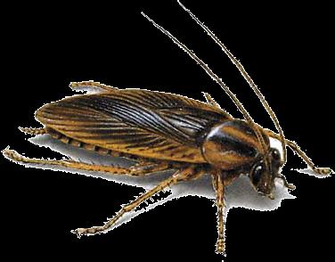 Teneplagas control de plagas en tenerife las palmas y - Exterminar hormigas en casa ...