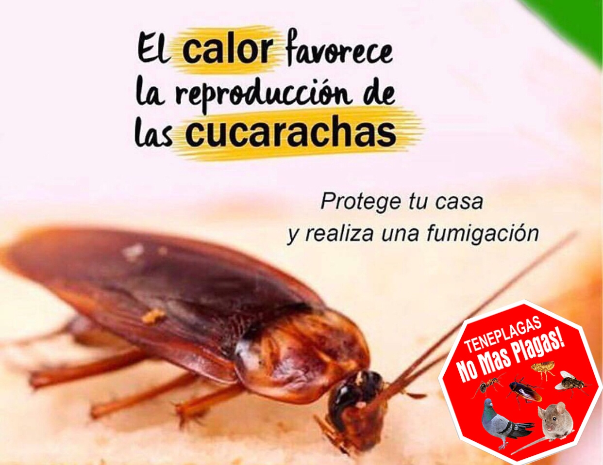 Tengo cucarachas en casa qu hago teneplagas - Tengo pulgas en casa ...