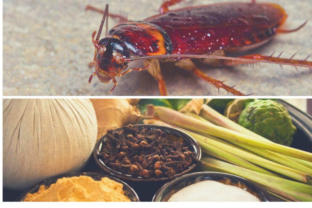 Remedios caseros para matar cucarachas